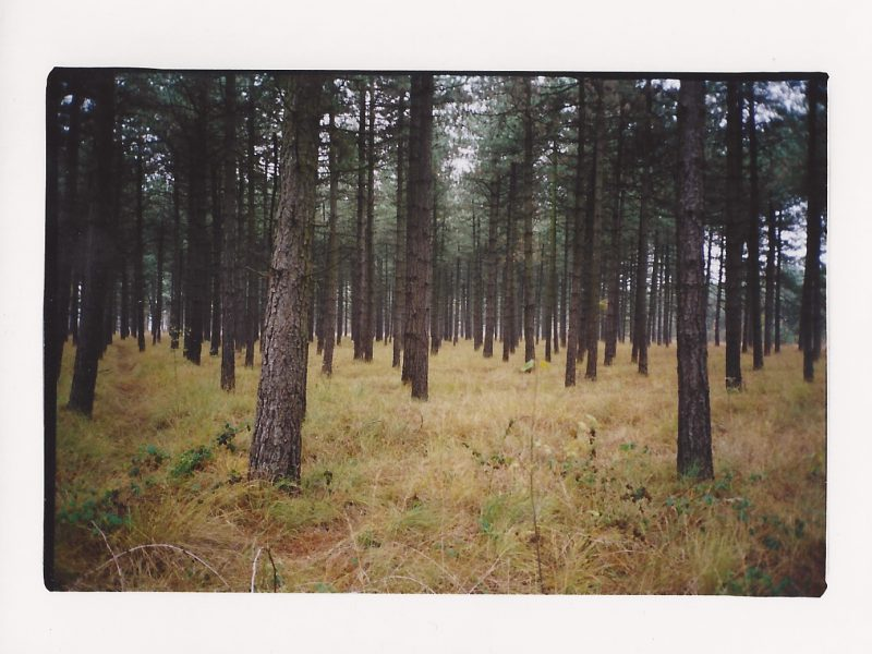 Forest Maarten Van Severen 2002